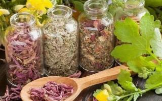 Какими травами лечить печень и поджелудочную железу