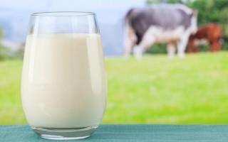 Полезно ли молоко для печени или есть противопоказания