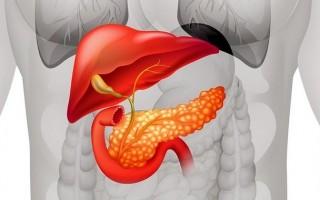 Печень и поджелудочная железа: как поддержать органы и предупредить развитие болезней