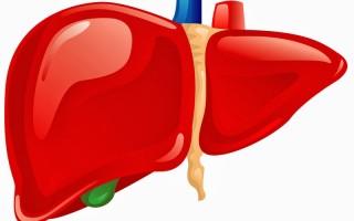 Все о болезнях печени и желчного пузыря — от симптоматики до грамотного лечения