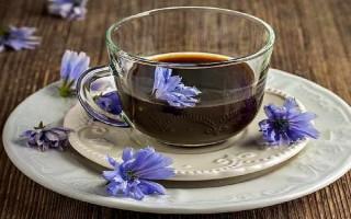 Полезен ли для печени цикорий, и как лечиться напитком из этого растения