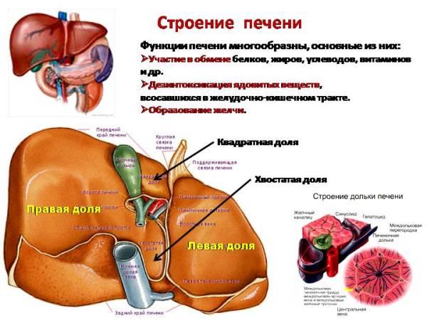 Узи брюшной полости образование на печени