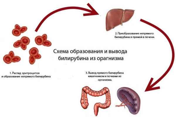 Высокий билирубин лечение народные средства