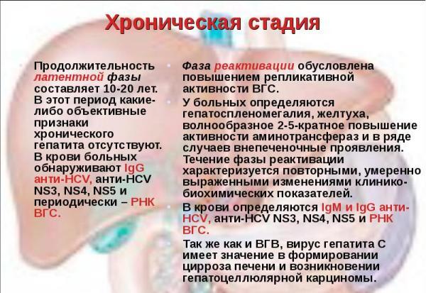 Продолжительность развития гепатита без терапии;