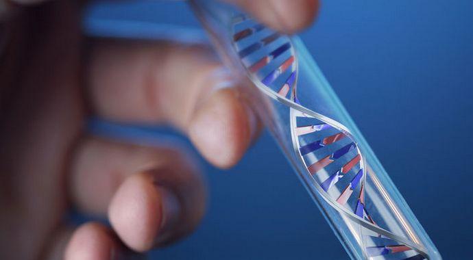 Синдром Жильбера. Генетический анализ на синдром жильбера в гене UGT1A1