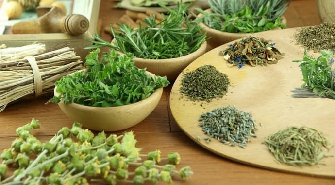Какие травы полезны для печени и поджелудочной