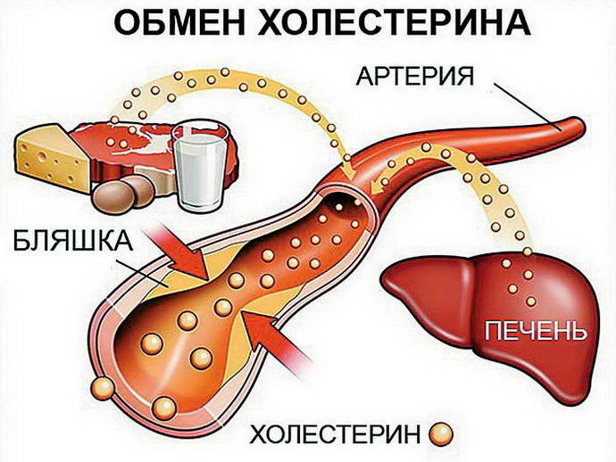 Лекарственные средства Гептрал и Урсосан