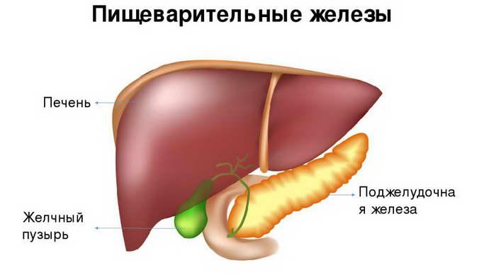 реактивные изменения печени и поджелудочной железы у ребенка