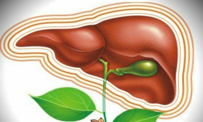 Травы при заболевании печени и поджелудочной железы
