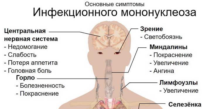 вирусный тип цирроза