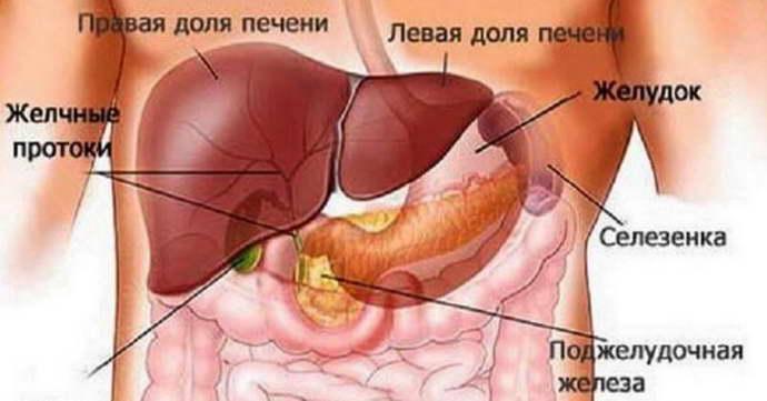 Роль печени в организме