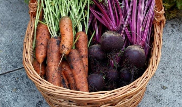 Полезными для печени считаются свекла и морковь.